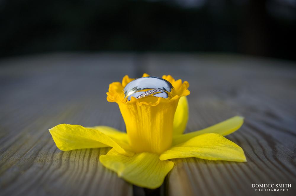 Weddings rings on a daffodil