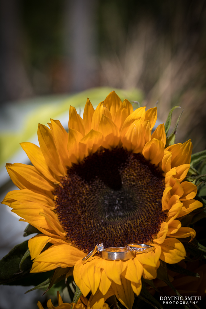 Wedding Rings on a Sunflower