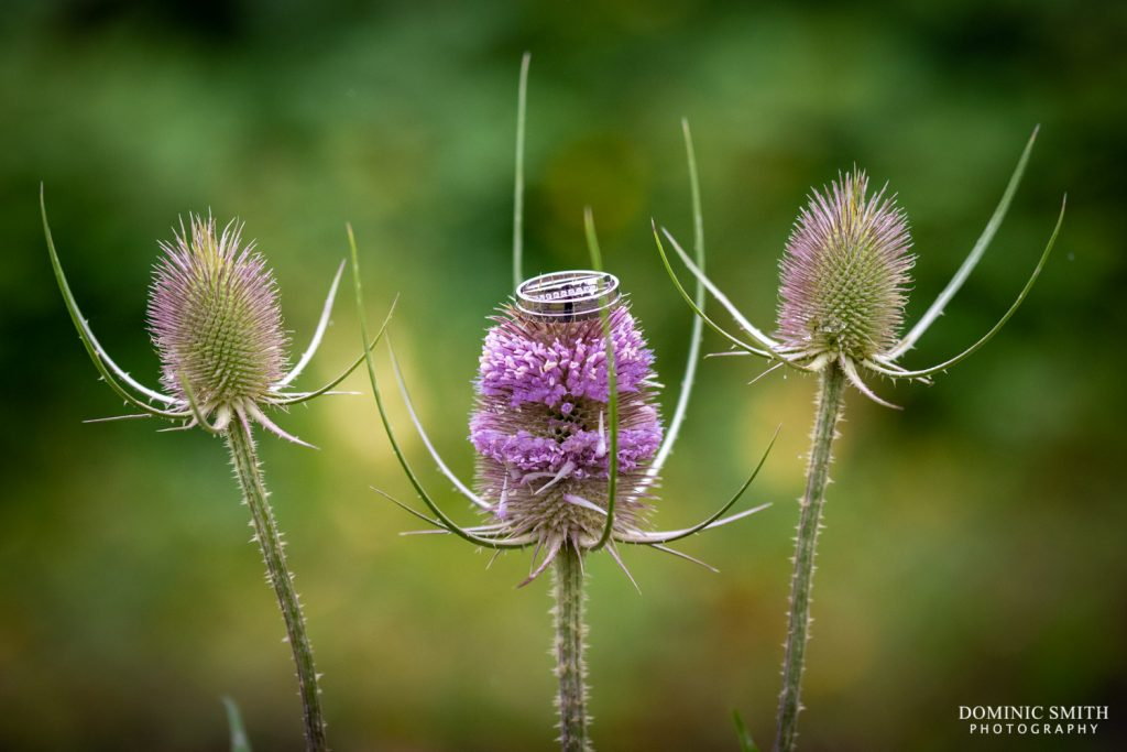 Wedding rings on a thistle